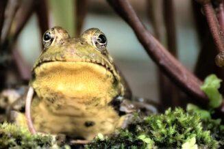 10 Zaskakujących Informacji i Ciekawostek o Żabach Dla Dzieci