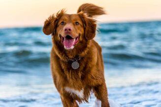 Czy psy to dobre zwierzęta dla dzieci?
