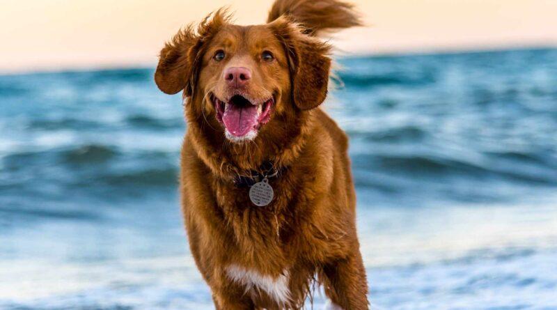 zabawa z psem na plaży