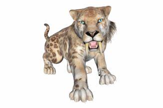 Tygrys szablozębny – smilodon: 11 ciekawostek