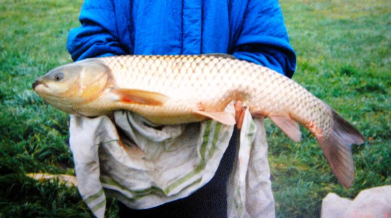 ryba amur