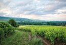 Winnica we Francji