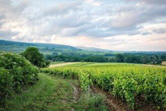 Winnice we Francji - Interesujące Ciekawostki, Informacje