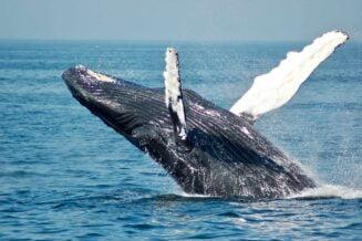 10 Fascynujących Ciekawostek o Wielorybach